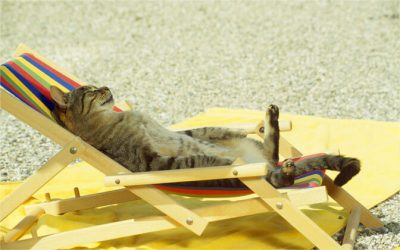 Cats on Vacation? This Itemlist Is All You Need